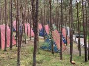 Ferienhaussiedlung im Kiefernwald